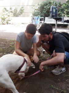 """עם הכלבה פולה שקפצה לביקור בביה""""ח תל השומר"""